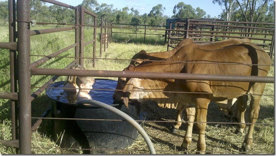 Ella-Beth and Clancy with steers