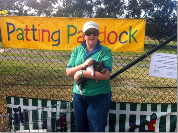 Patting Paddock