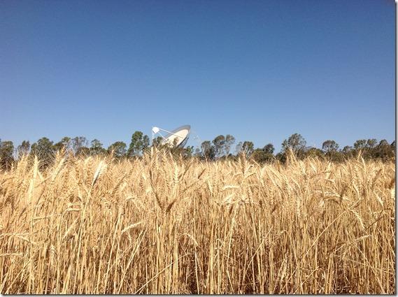 Wheat & The Dish (5)