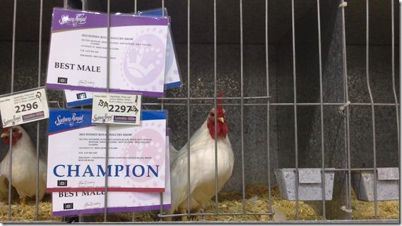 Champion 2013 Jap