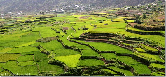 sagada-rice-terrace-farm-green-fields-philippines