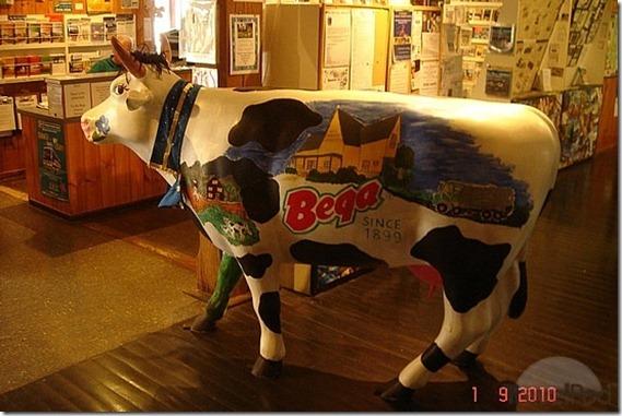 bega-cow-eden