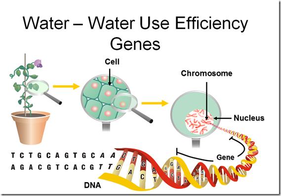 Water Use efficiency Genes