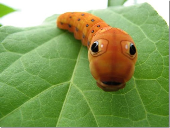 Bug-Eyes-473