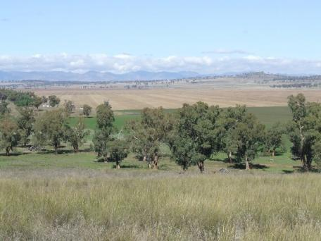"Beautiful view of the pastures at my Uncles property ""Colly Plains North"" Quirindi, NSW."