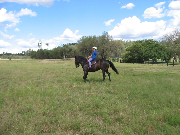 """Horse riding at my Uncles property """"Colly Plains North"""" Quirindi, NSW."""