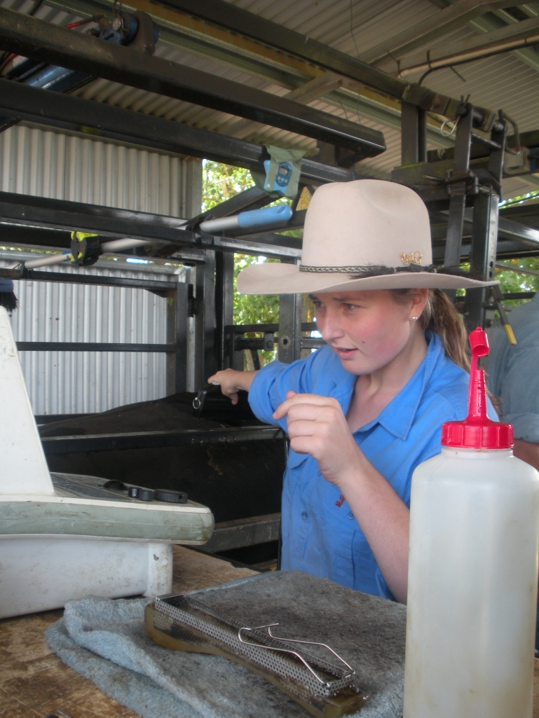 On Industry Placement at the Animal Genetics and Breeding Unit (AGBU) Scanning Cattle at Bald Blair Angus Guyra NSW