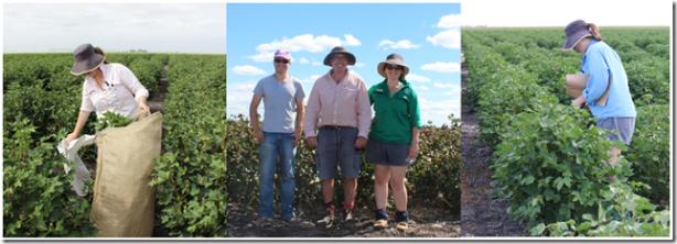 Field work sampling in Toowoomba for my honours trial