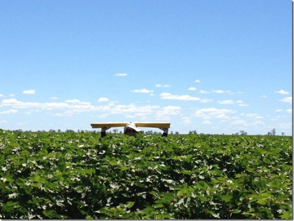 In the field bug checking at Moree NSW