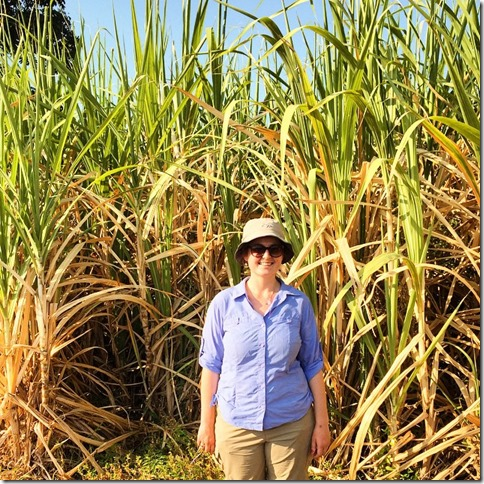 Looking at FMC herbicide trials on Sugarcane near Kanchanaburi, Thailand
