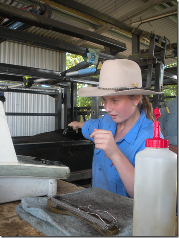 On Industry Placement at the Animal Genetics and Breeding Unit (AGBU) Scanning Cattle at Bald Blair Angus, Guyra NSW.