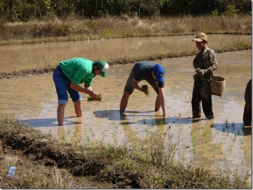 Hugh Burrell_Rice planting in Laos