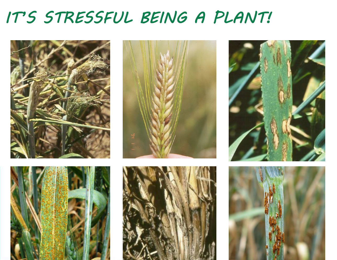 Its stressful being a plant - Nature curiosity stressed out plants emit animal like signals ...