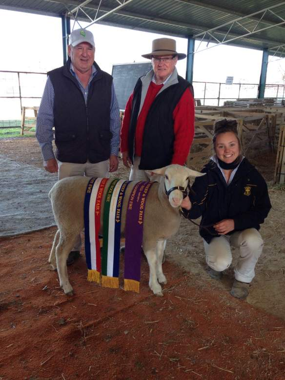 Supreme Ewe at Holbrook