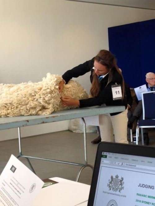Competiting in Fleece Judging
