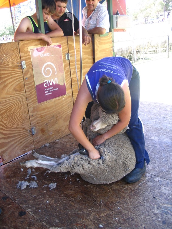 2014-angaston-show-novice-shearing-comp