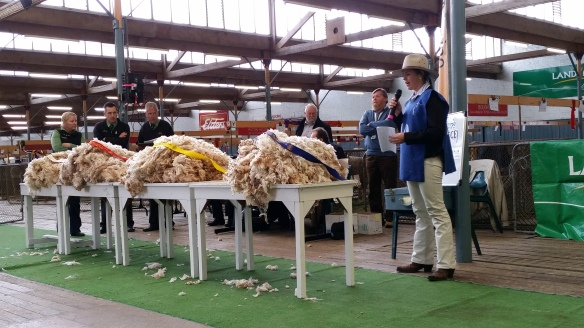 2016-state-finals-merino-fleece-judging