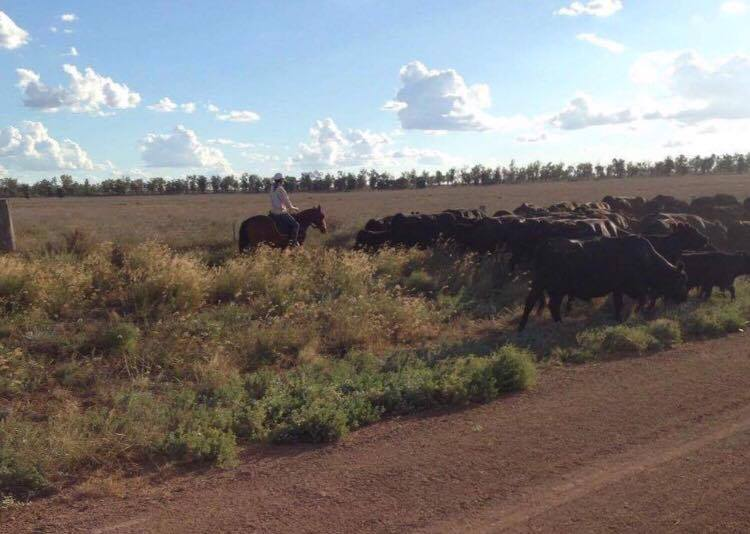 Mustering some cattle on the weekends