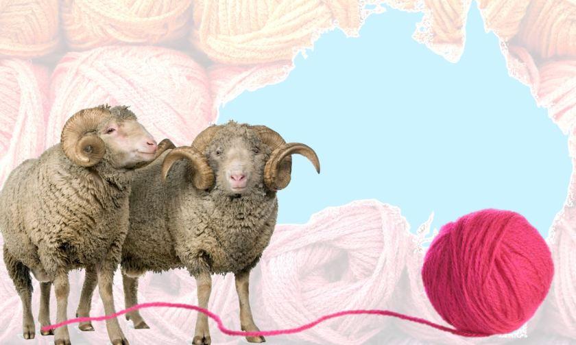 Amazing Wool.jpg