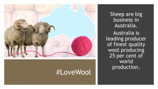 Wool Facts (3)