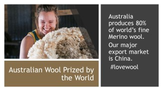 Wool Facts (4)