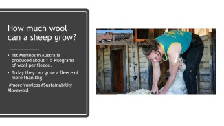 Wool Facts (5)
