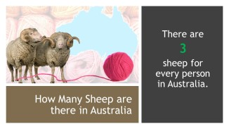 Wool Facts (7)