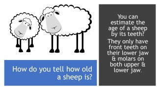 Wool Facts (9)