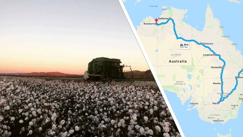 Alexander Picking Cotton Across Australia.JPG
