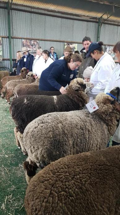 Melissa Henry Judging Coloured Sheep