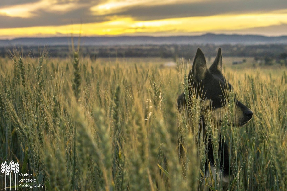 Young Farming Champions Muster October 2018 2nd Edition