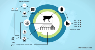 cow_cycle.png.860x0_q70_crop-smart