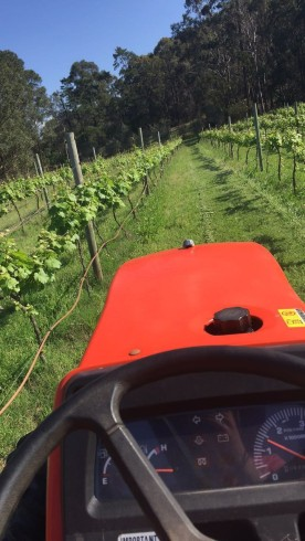 Tizzana Winery Image
