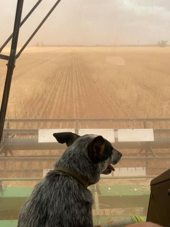 Emma Ayliffe harvesting.jpg