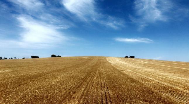 Marlee Harvest 4