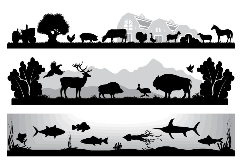 Animal Agriculture.jpg